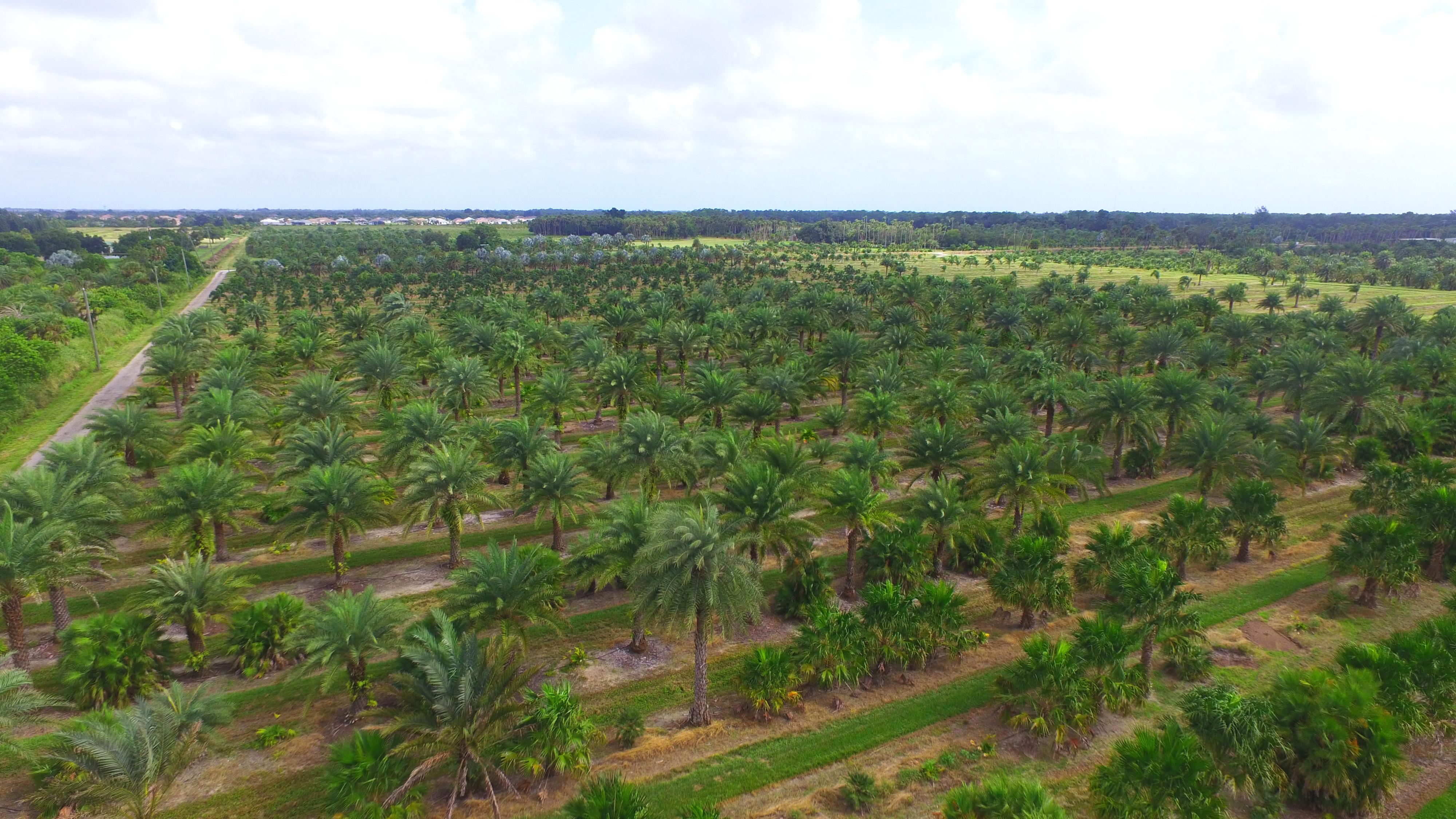 Sexton Palms – Vero Beach, Fl Nursery and Palm Tree distributors